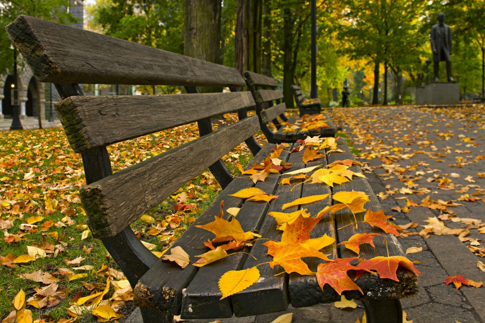 Maple and Elm Tree Fall Leaves on Park Benches